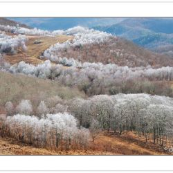 Rime ice coats the trees along the Buckey Ridge, Max Patch, Pisg