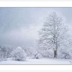 WD0272: Buckeye tree in falling snow at the edge of a mountain m