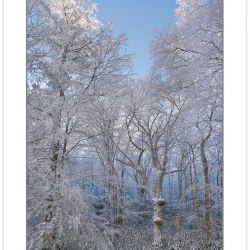 Snowy acid cove hardwood forest, Pisgah national Forest, NC, win