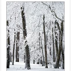 WL0131: Snow-coated Forest, Pisgah National Forest, NC, Winter