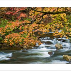 AD0225: Autumn foliage over the Bald River, Cherokee National Fo