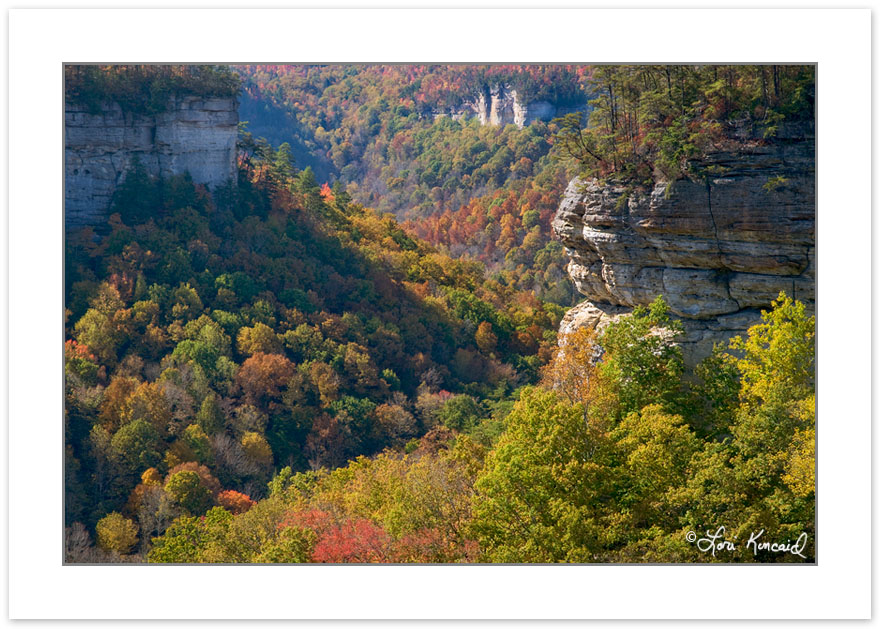 AD0234: Pogue Creek State Natural Area, Tennessee, Autumn