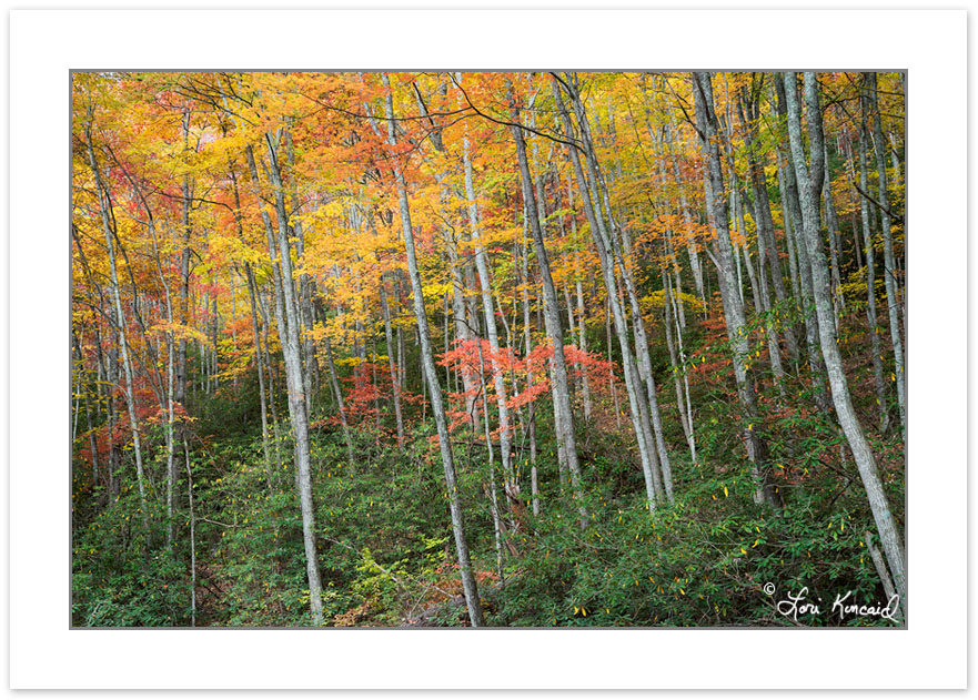 AD0747: Hardwood forest, Cherokee National Forest, Autumn