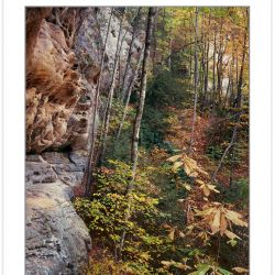 AL0222: Fall foliage along sandstone cliffs of Pogue Creek State