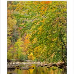AL0257: Citico Creek, Cherokee National Forest, TN, Autumn
