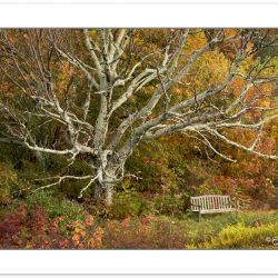 RD0128: Garden bench, Bald Mountains, NC-, AutumnTN