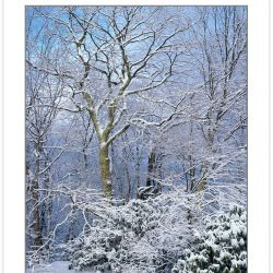 WL0142: Snow-covered trees, Bald Mountains, TN, winter