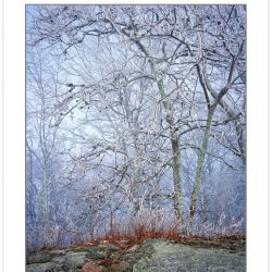 WL0146: Rock outcrop and snow-coated trees, Bald Mountains, TN,