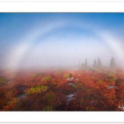DAD0314: Fogbow at Ber Rocks Nature Preserve, Dolly Sods, WV, autumn