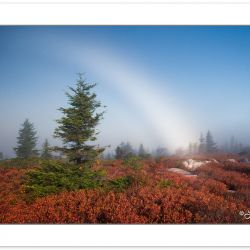 AD0319: Fog Bow over Bear Rocks Preserve area of Dolly Sods, WV,