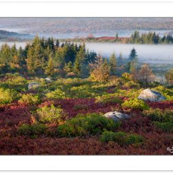 AD0338: Morning View of Dolly Sods Wilderness with ground fog an