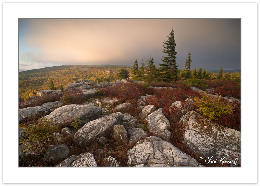 AD0553: Sunrise View of Dolly Sods Wilderness  with red Blueberr