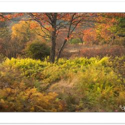 AD0572: Fern fields, Dolly Sods Wilderness, WV