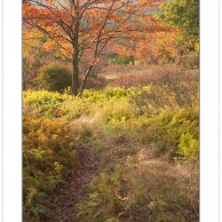 AD0573: Fern fields, Dolly Sods Wilderness, WV
