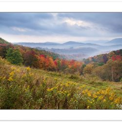 AD0577: Wildflower meadow at edge of Monongahela National Forest