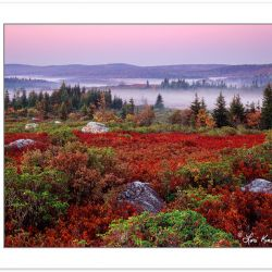 Sunrise View of Dolly Sods Wilderness  with red Blueberry and Hu
