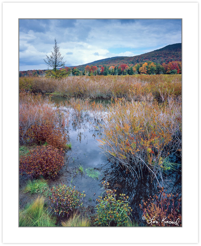 AL0251: Wetlands along the Freeland Trail, Canaan Valley Nationa